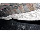 Сетка базальтовая МЕАСЕТ-БШ 50/50-25 шахтная (1.0x50)